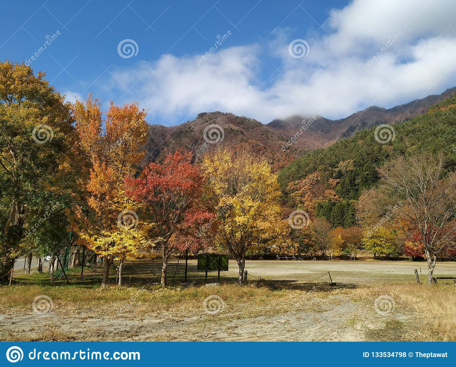 Maple Tree Is In Japan Stock Photo Image Of Space Graphic