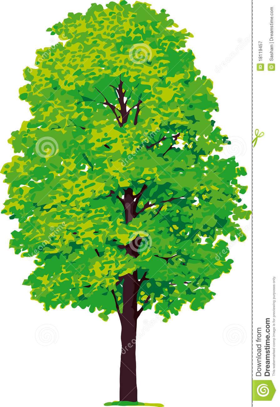 Maple Tree. Vector Royalty Free Stock Photography - Image ...