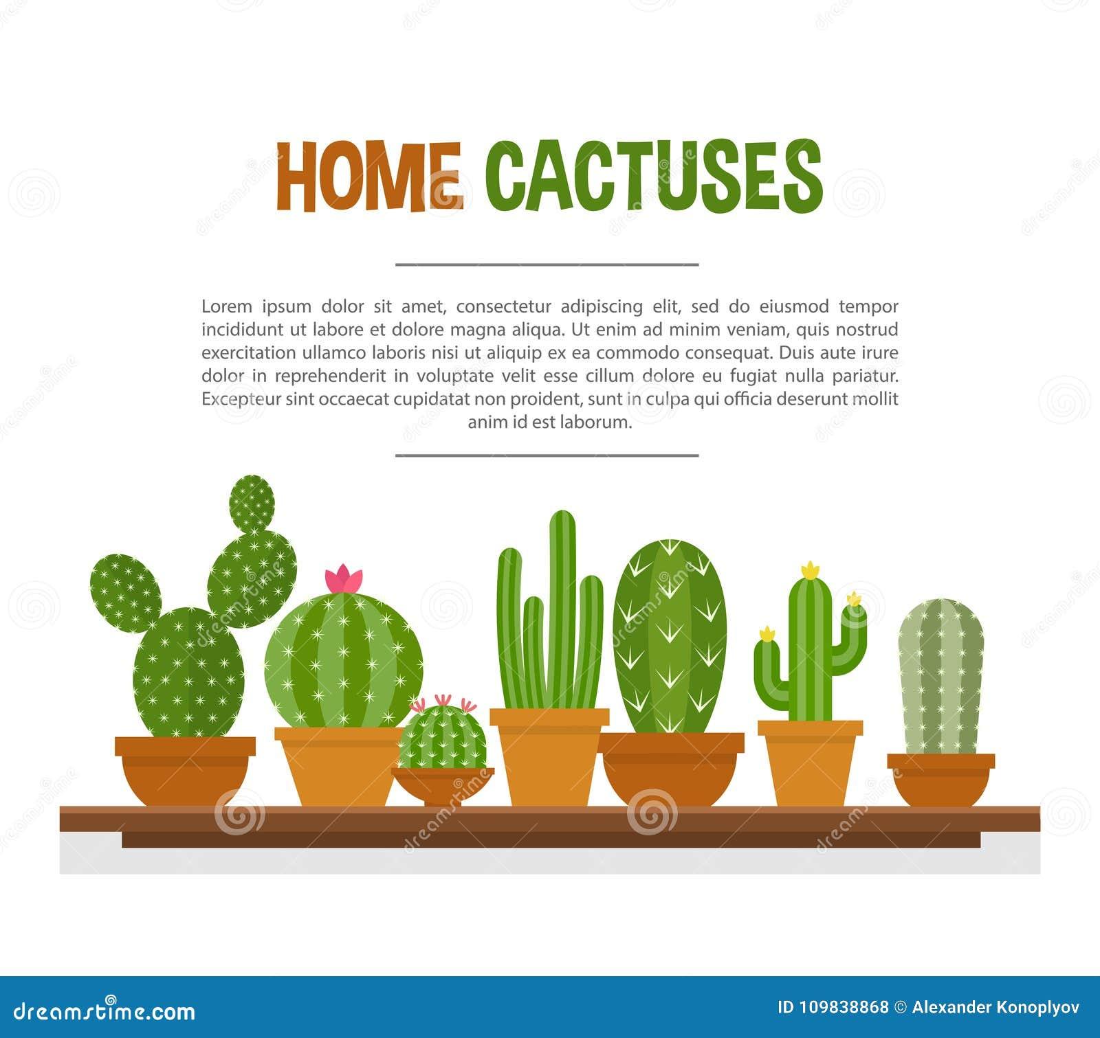 Maqueta casera de los cactus