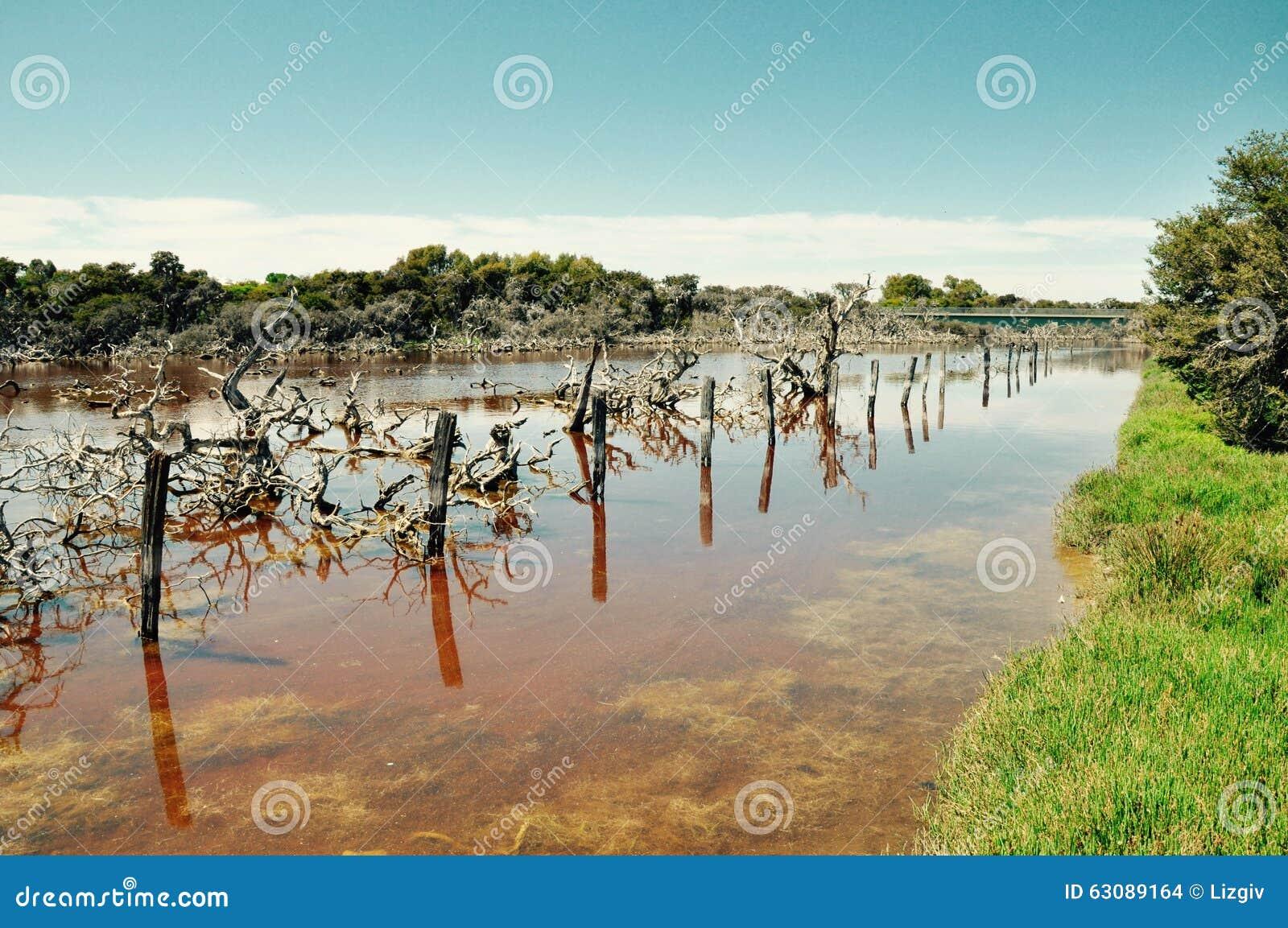 Download Marécages De Coogee De Lac : Perspective De Courrier, Australie Occidentale Photo stock - Image du australie, réflexions: 63089164