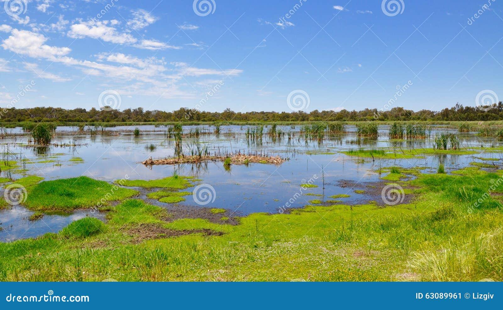 Download Marécages De Lac Bibra, Australie Occidentale Image stock - Image du wispy, australie: 63089961