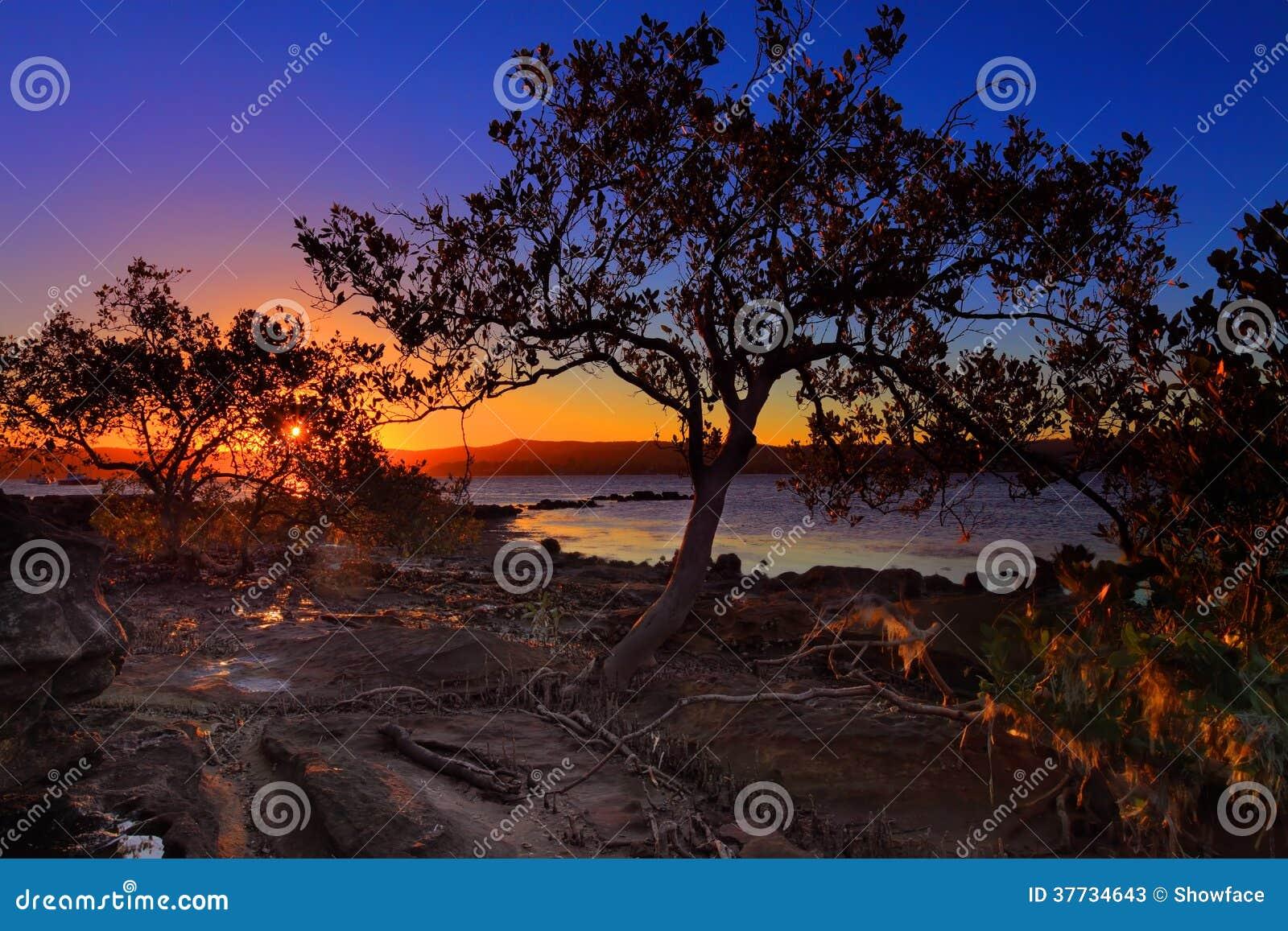 Marée basse de palétuvier de coucher du soleil et bas-fond intertidal