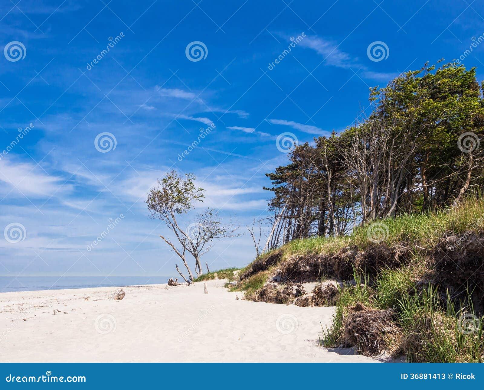 Download Mar Baltico immagine stock. Immagine di paesaggio, filiali - 36881413