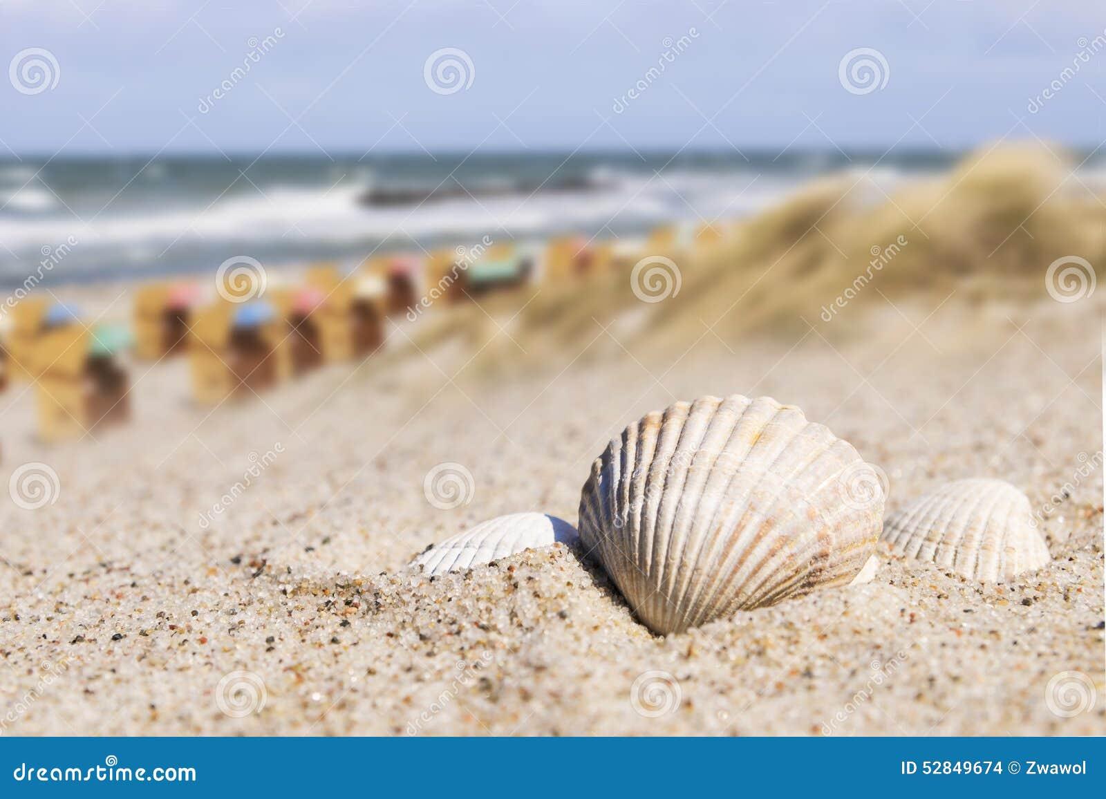 Mar baltico delle sedie di spiaggia e della conchiglia fotografia