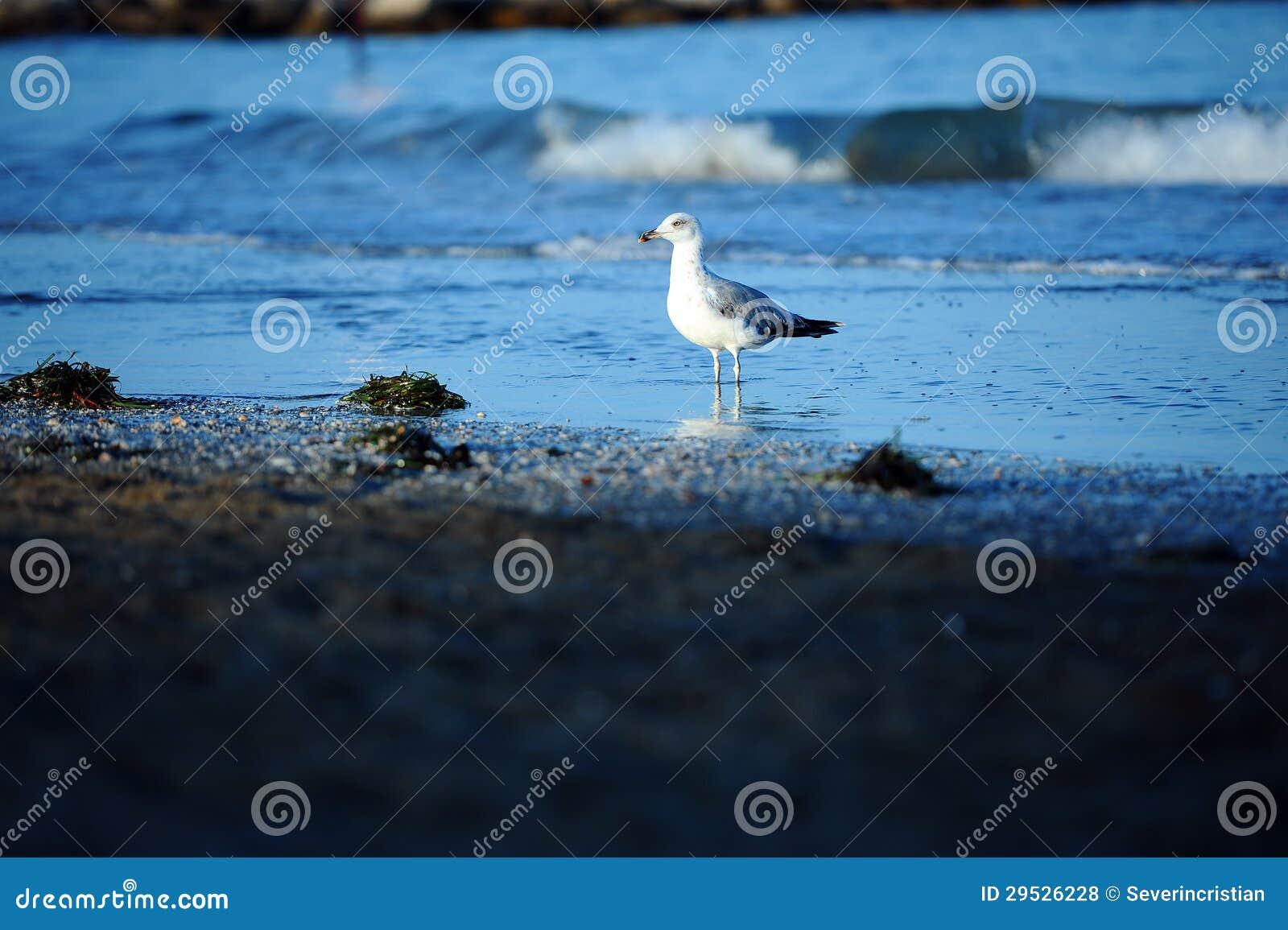 Mar da praia da gaivota