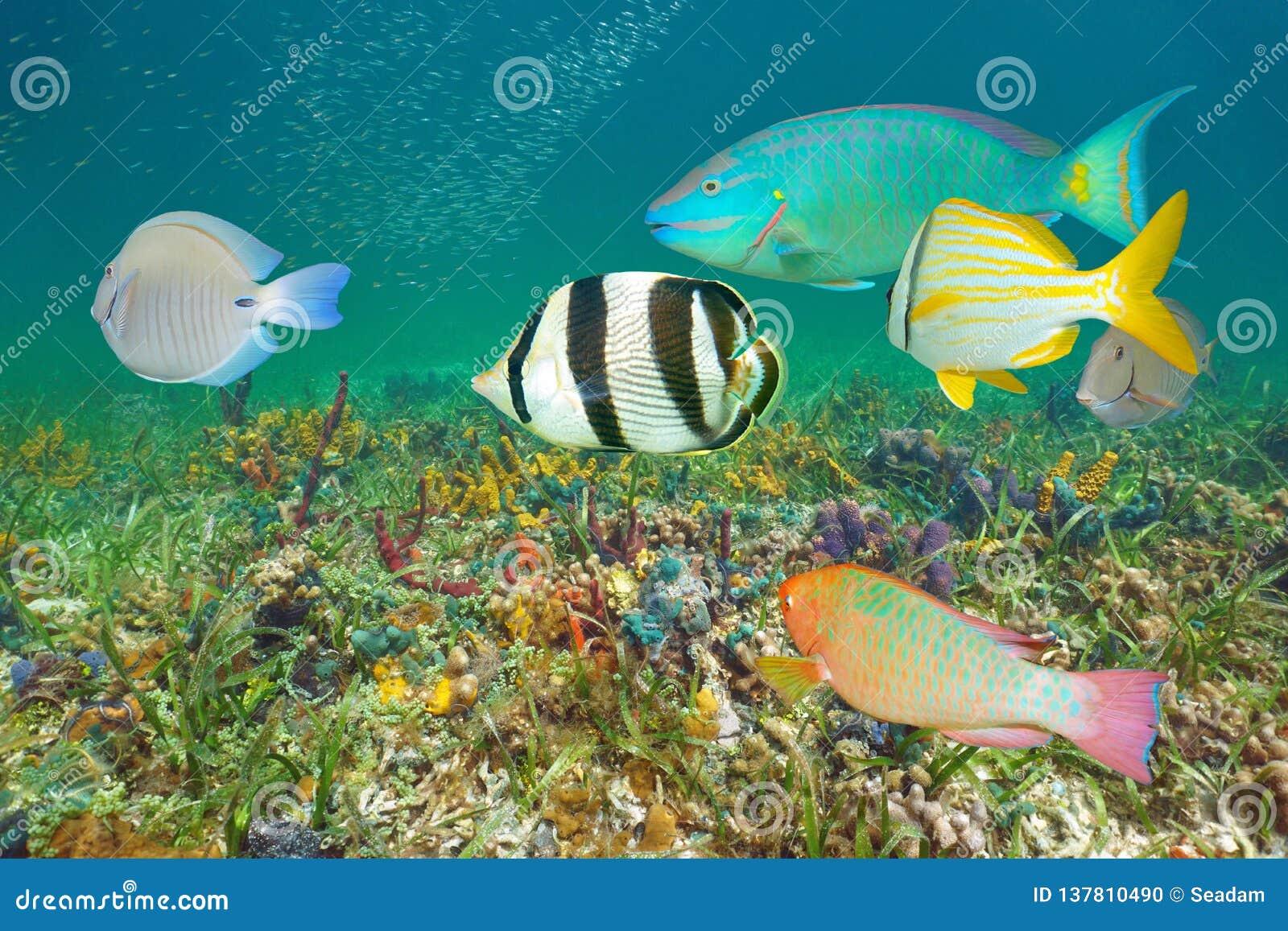 Mar Das Caraíbas Dos Peixes Tropicais Coloridos Subaquáticos Foto ...