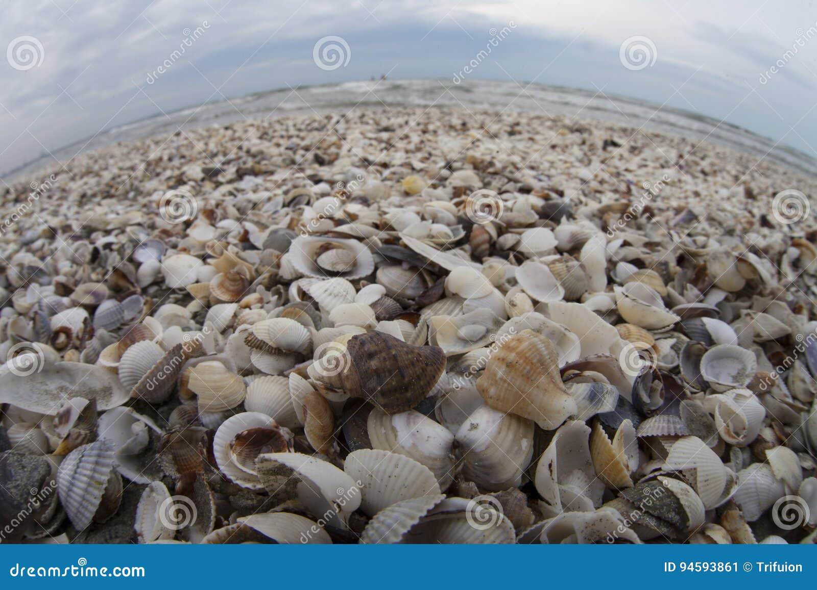Mar de cáscaras
