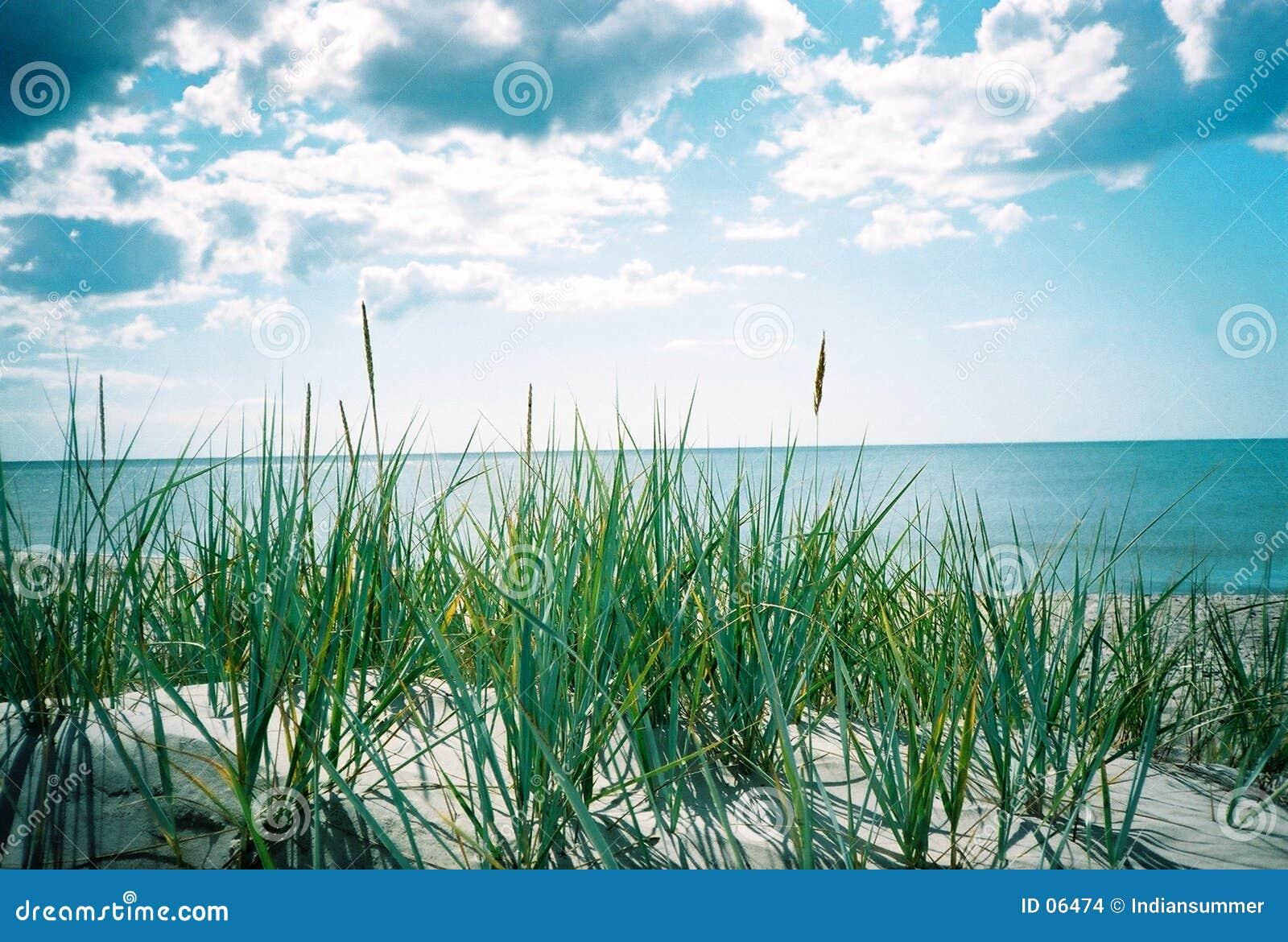Mar do verão. Uma vista do sandhill
