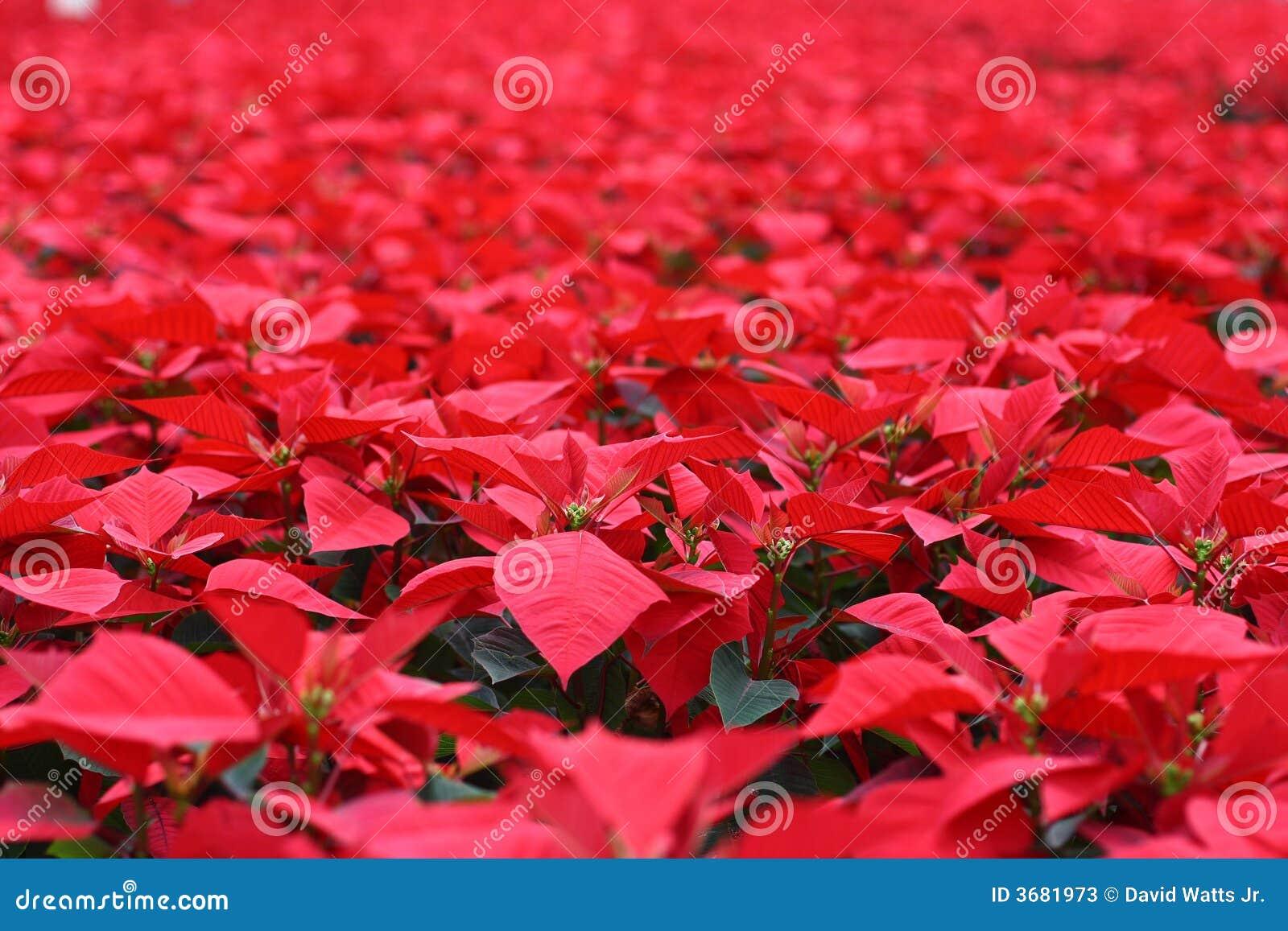 Mar do vermelho