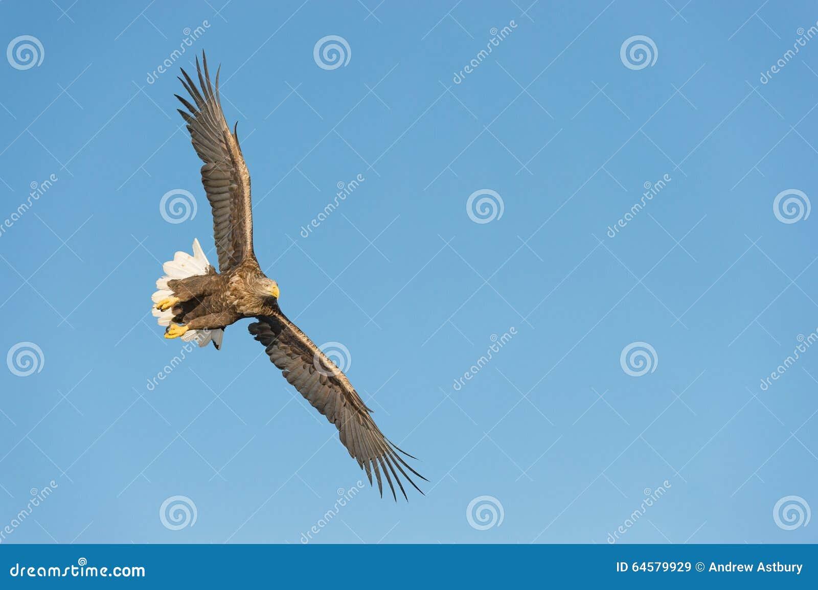 Mar Eagle da caça