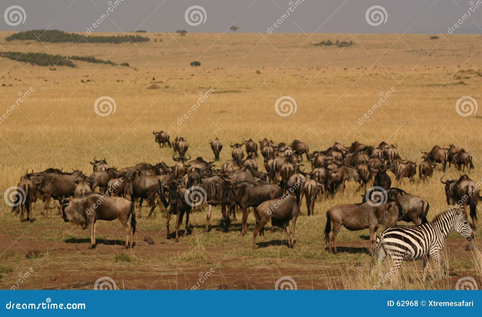 Mara μετανάστευση