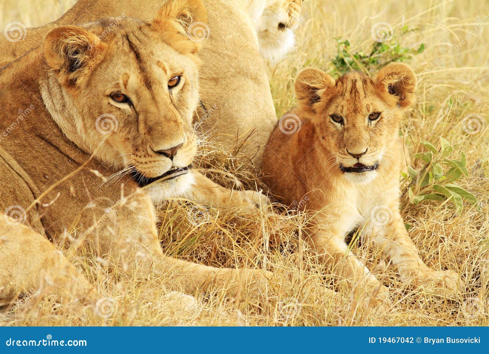Mara van Masai Leeuwen