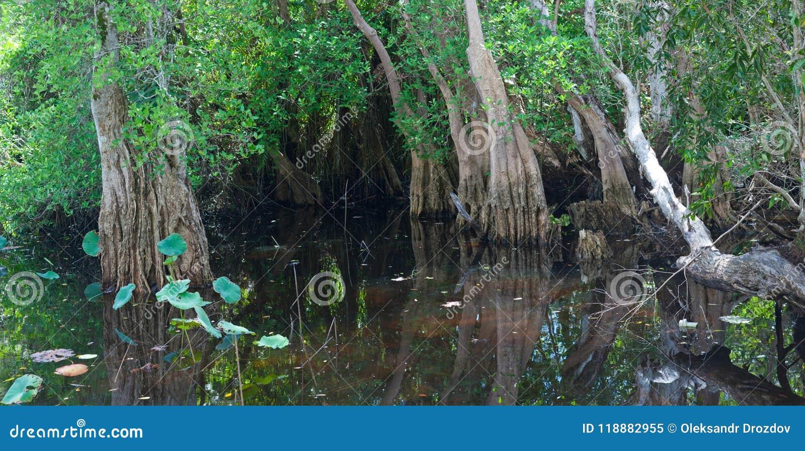 Marais tropical