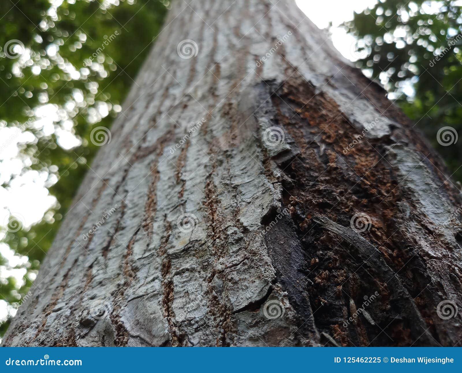 Maravilha da opinião do fim da natureza da casca de uma árvore