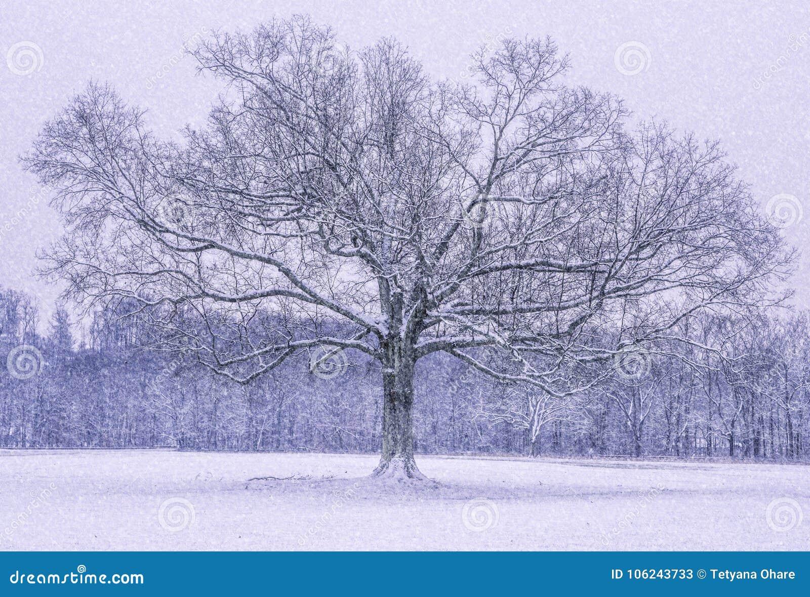Maravilhas do inverno de New-jersey