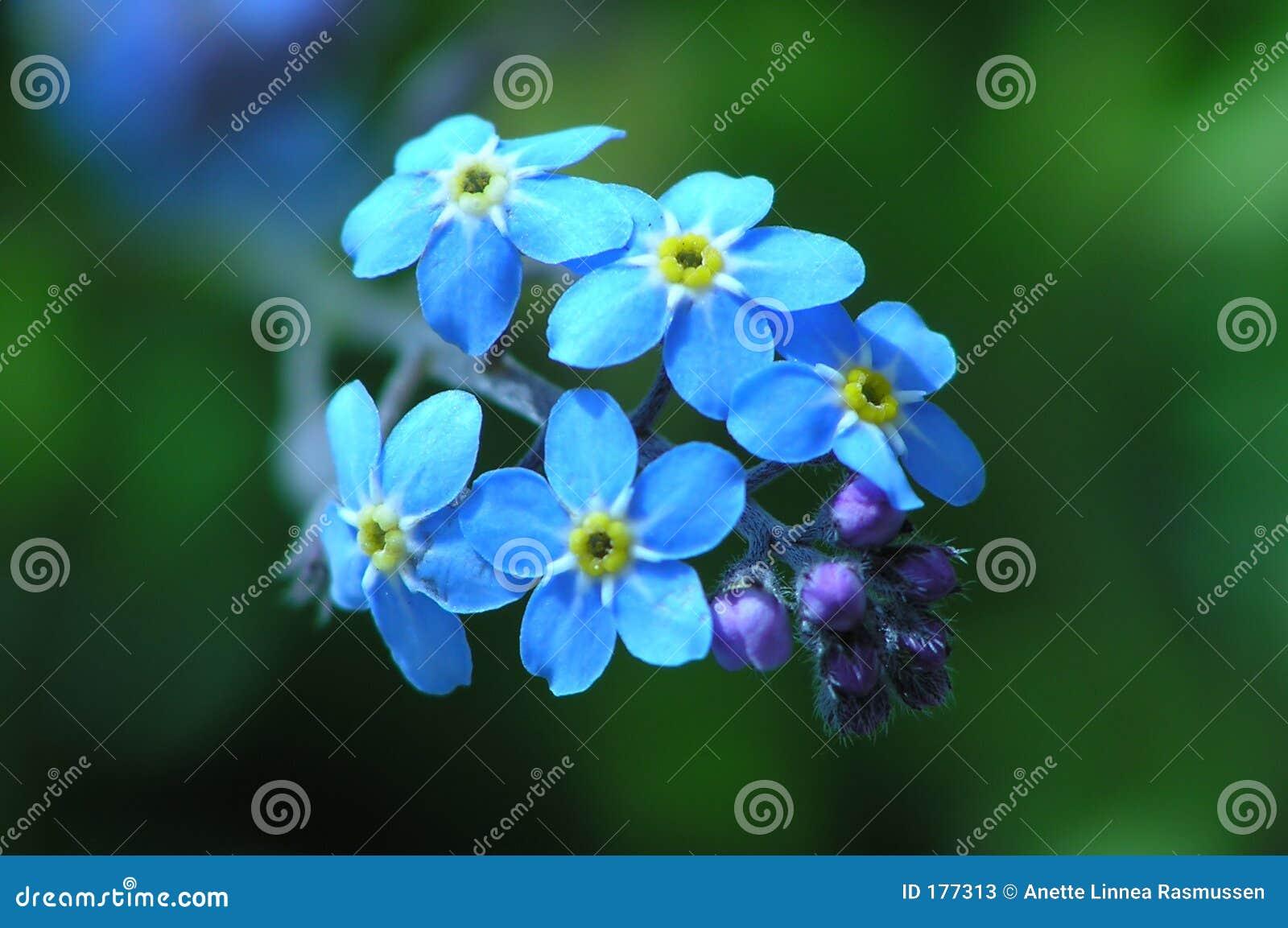 Maravilla azul