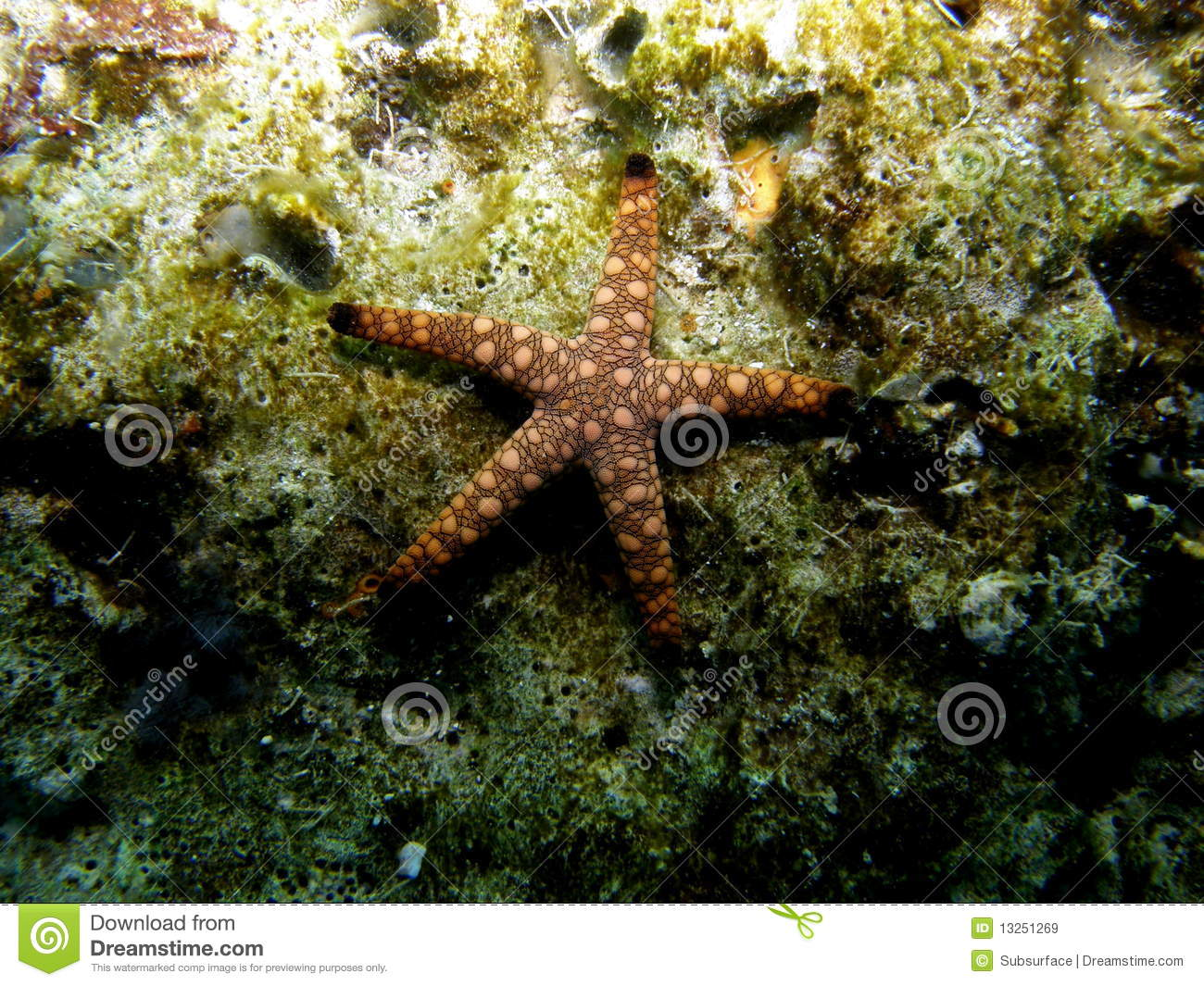 Marble Star Fish On Coral Reef Stock Image Image 13251269