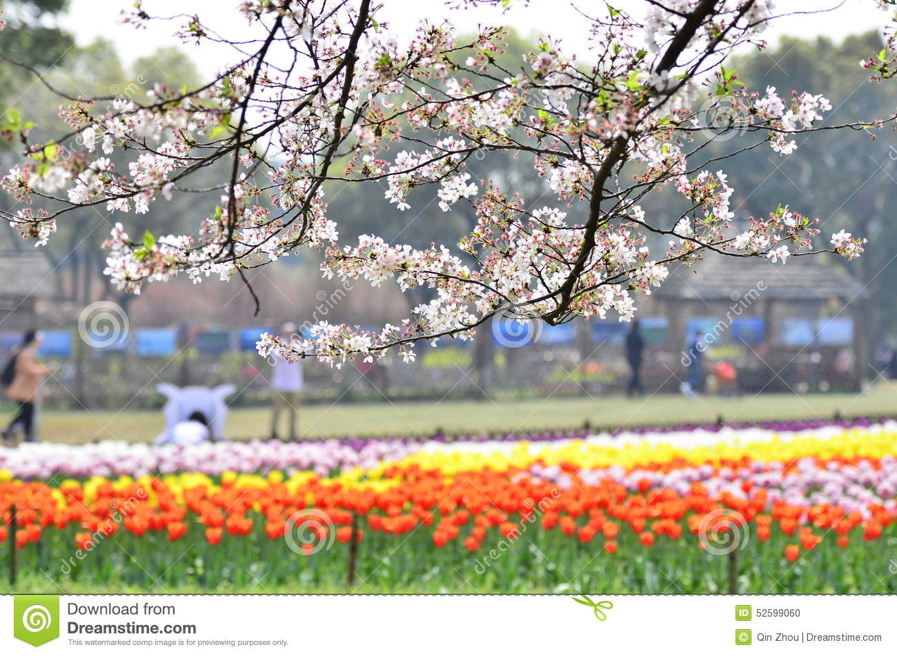 In March flowers In Full Bloom In The Mountain Scenic Area At Suzhou China S