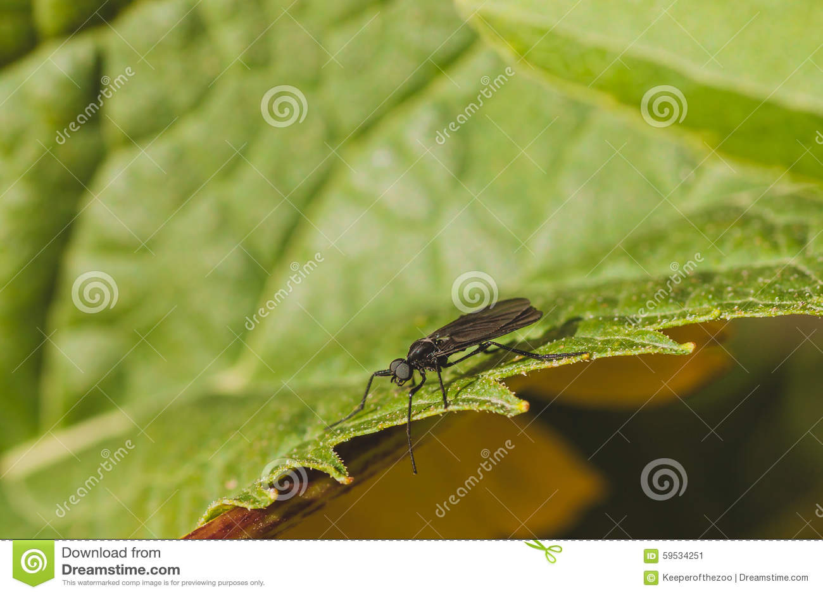 March Fly on Green Leaf