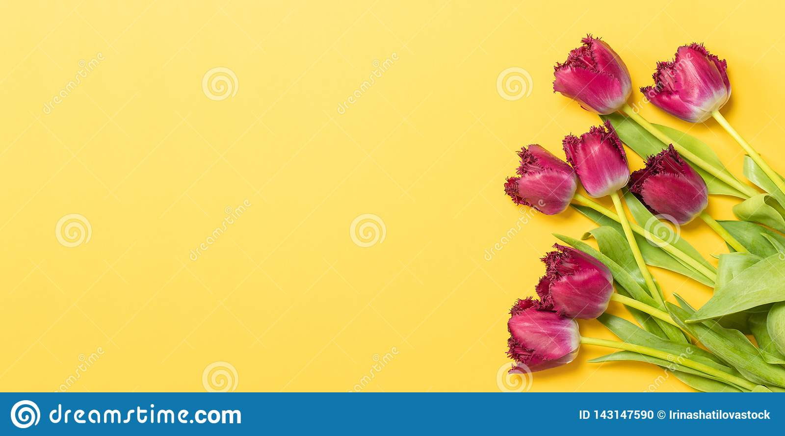 Spring concept. Fresh tulips on yellow background. Copy space