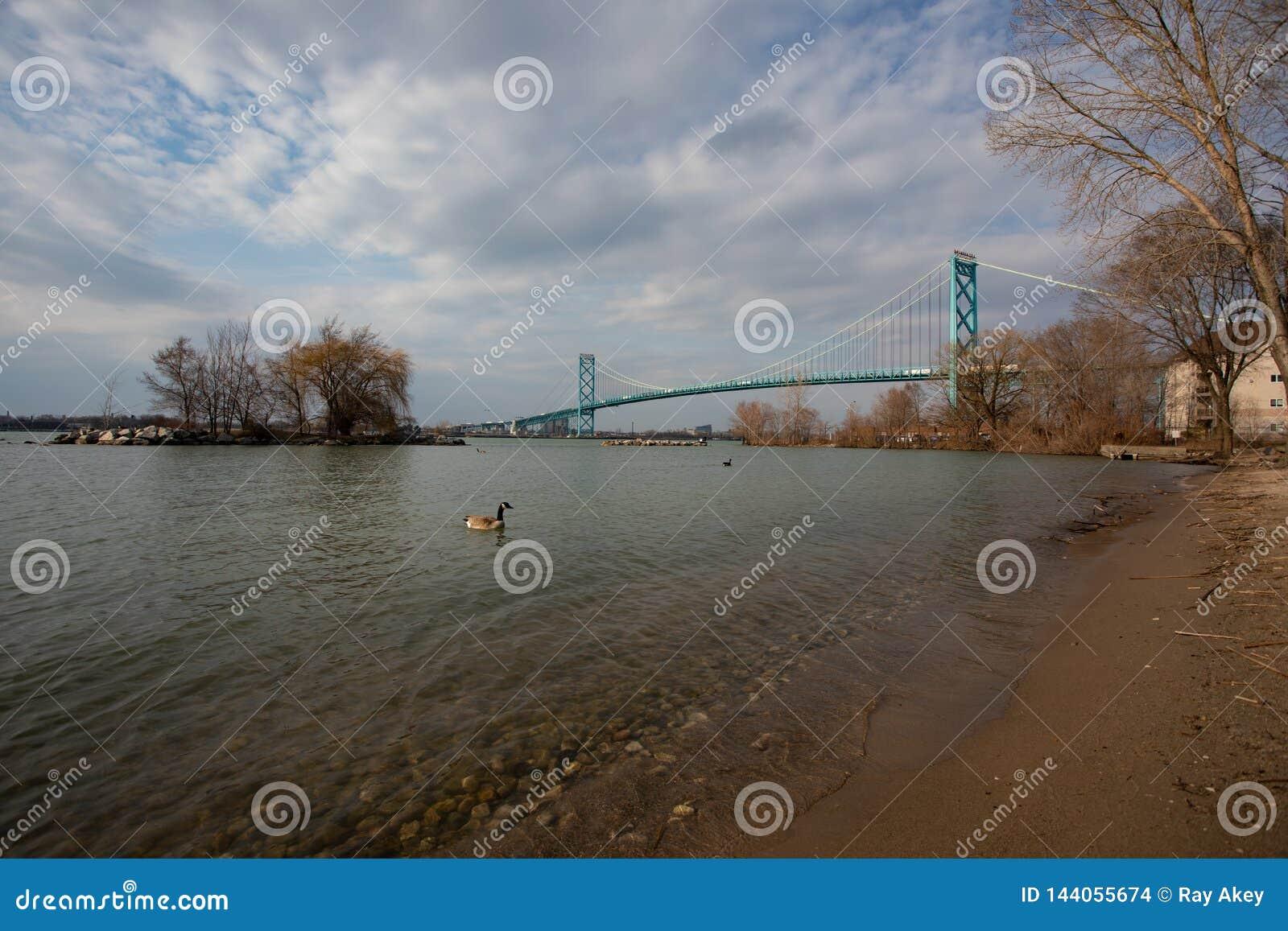 March 28 2019 Windsor Ontario Canada City Landscape McKee Park View Detroit River Michigan Crossing Ambassador Bridge Canada Goose Wallpaper