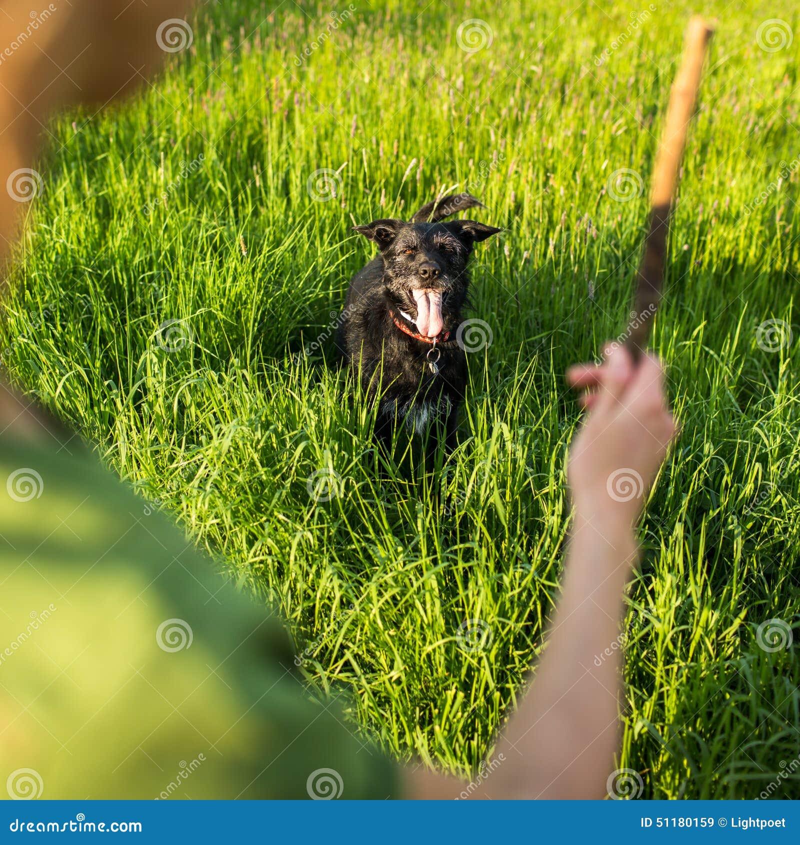 Marchant le chien - lancement du bâton à l effort