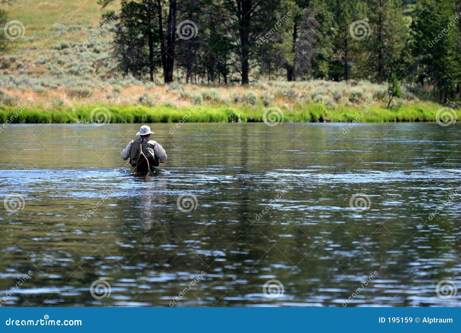 Marche dans l eau dans le fleuve de yellowstone