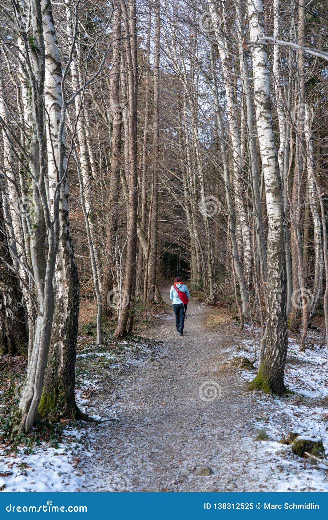 Marche dans une forêt de bouleau en hiver