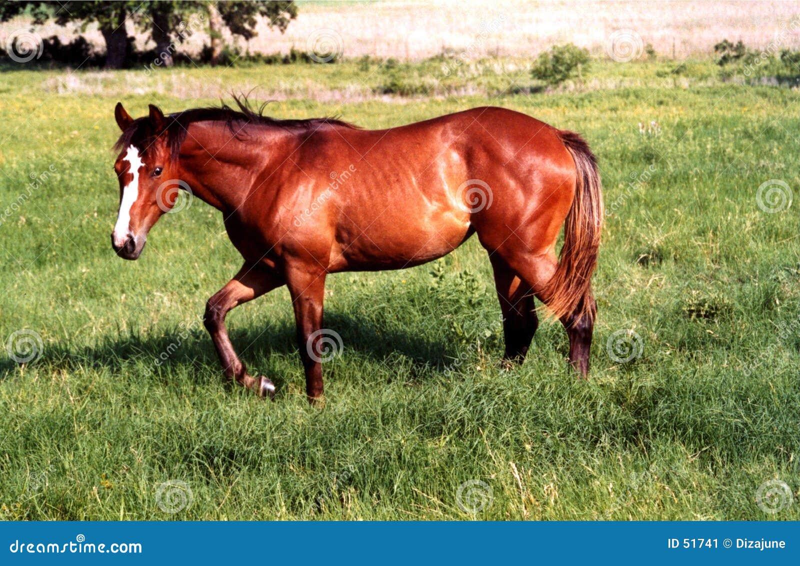 Download Marche de cheval image stock. Image du promenade, yearling - 51741