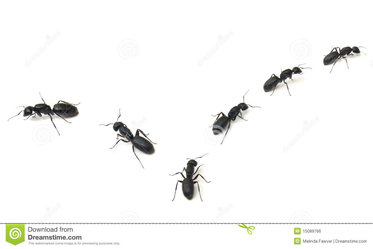 Marching Ants Clip Art Marching ants