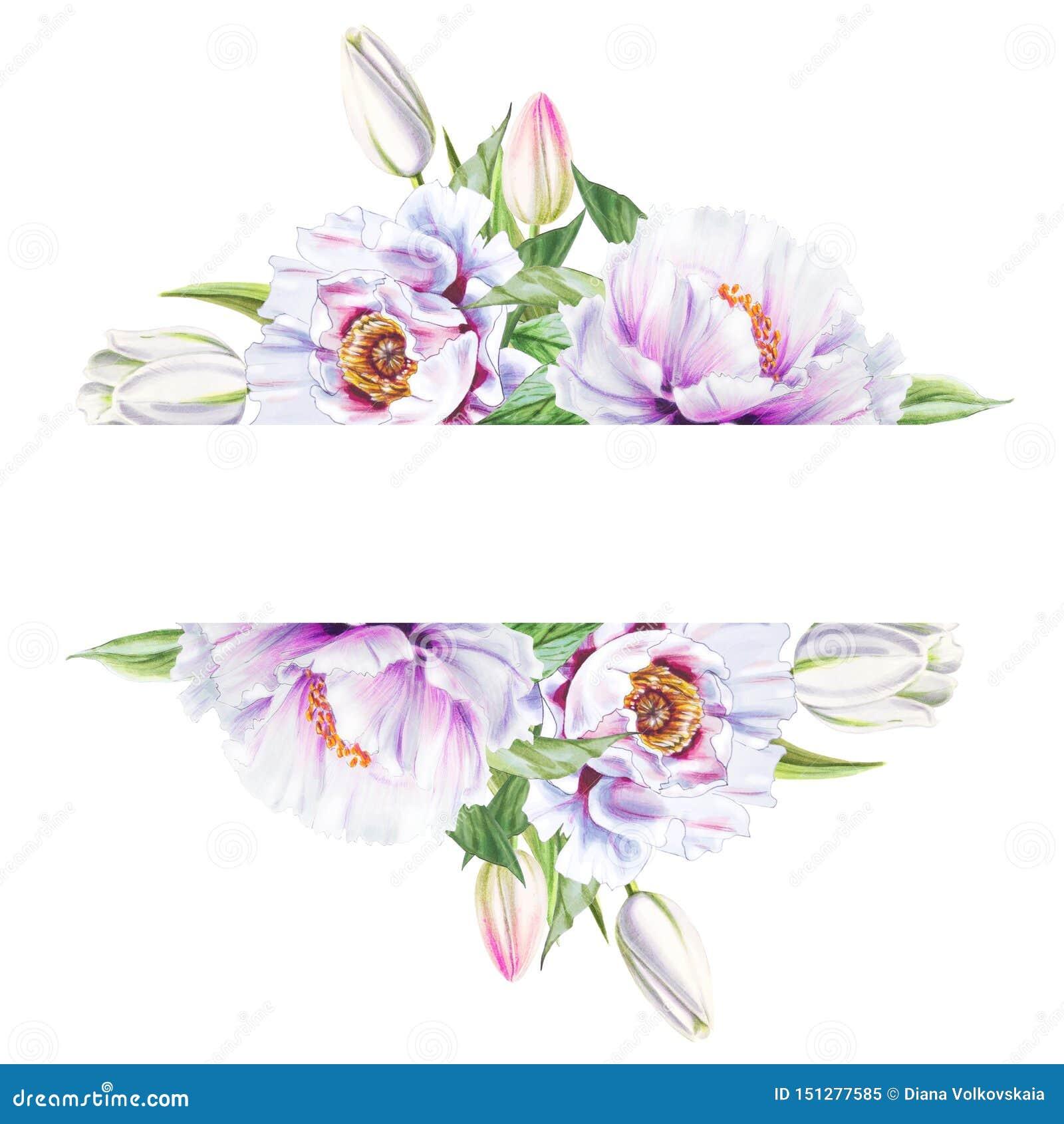 Marco blanco hermoso de la peonía y del tulipán Ramo de flores Impresi?n floral Dibujo del marcador