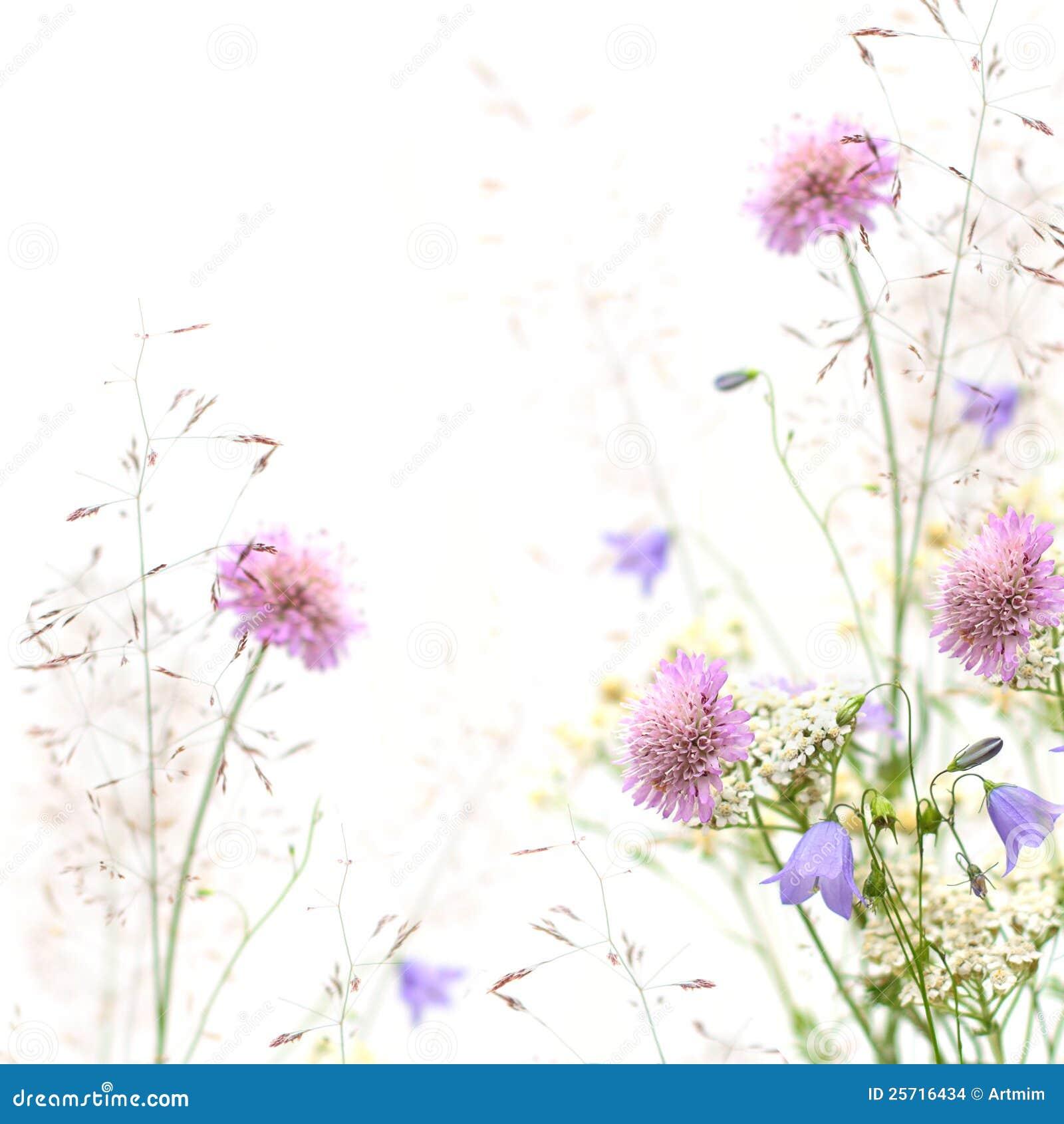 Marco de la flor - resorte o fondo del verano