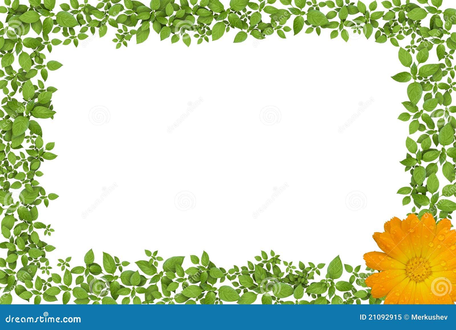 Marco de la planta verde con las flores amarillas foto de - Marcos para plantas ...