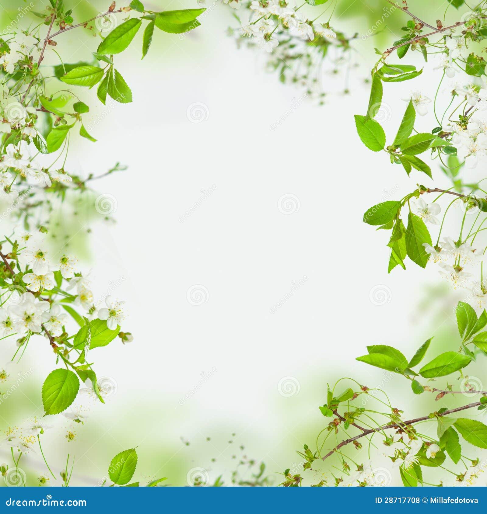 Marco De La Primavera De Flores Y De Hojas Del Verde Foto de archivo ...