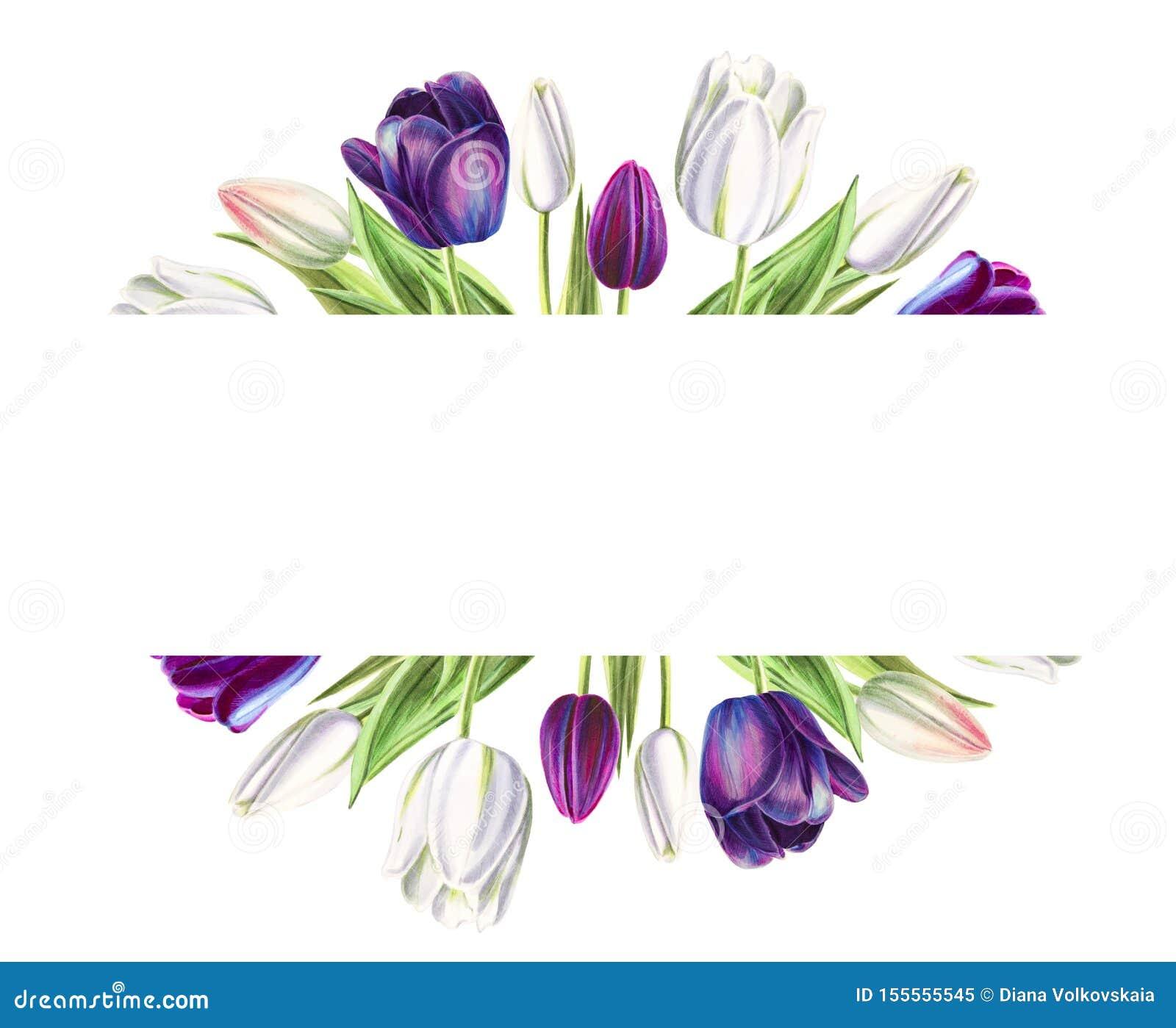 Marco de texto hermoso de los tulipanes blancos y negros Dibujo del marcador Pintura de la acuarela