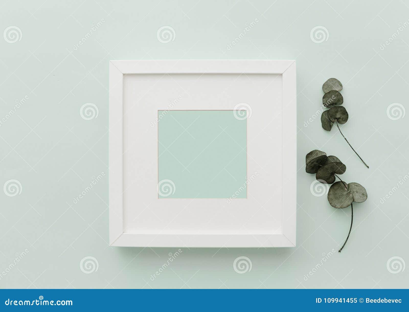 Marco del blanco de la maqueta Escena minimalista neutral de la endecha del plano con el cactus