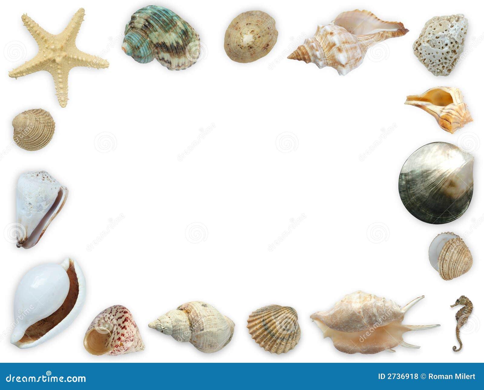Marco del Seashell