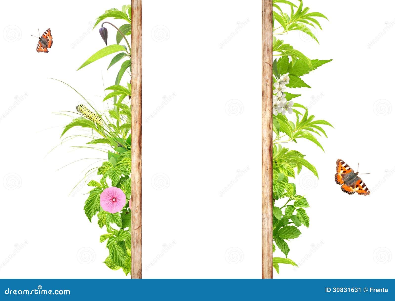 Marco del verano con las hojas, las flores y los insectos verdes