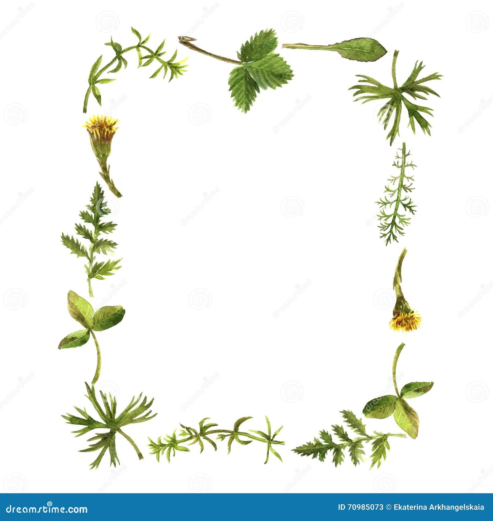 Marco floral con las hierbas y las hojas del dibujo de la acuarela stock de ilustraci n - Marcos para plantas ...