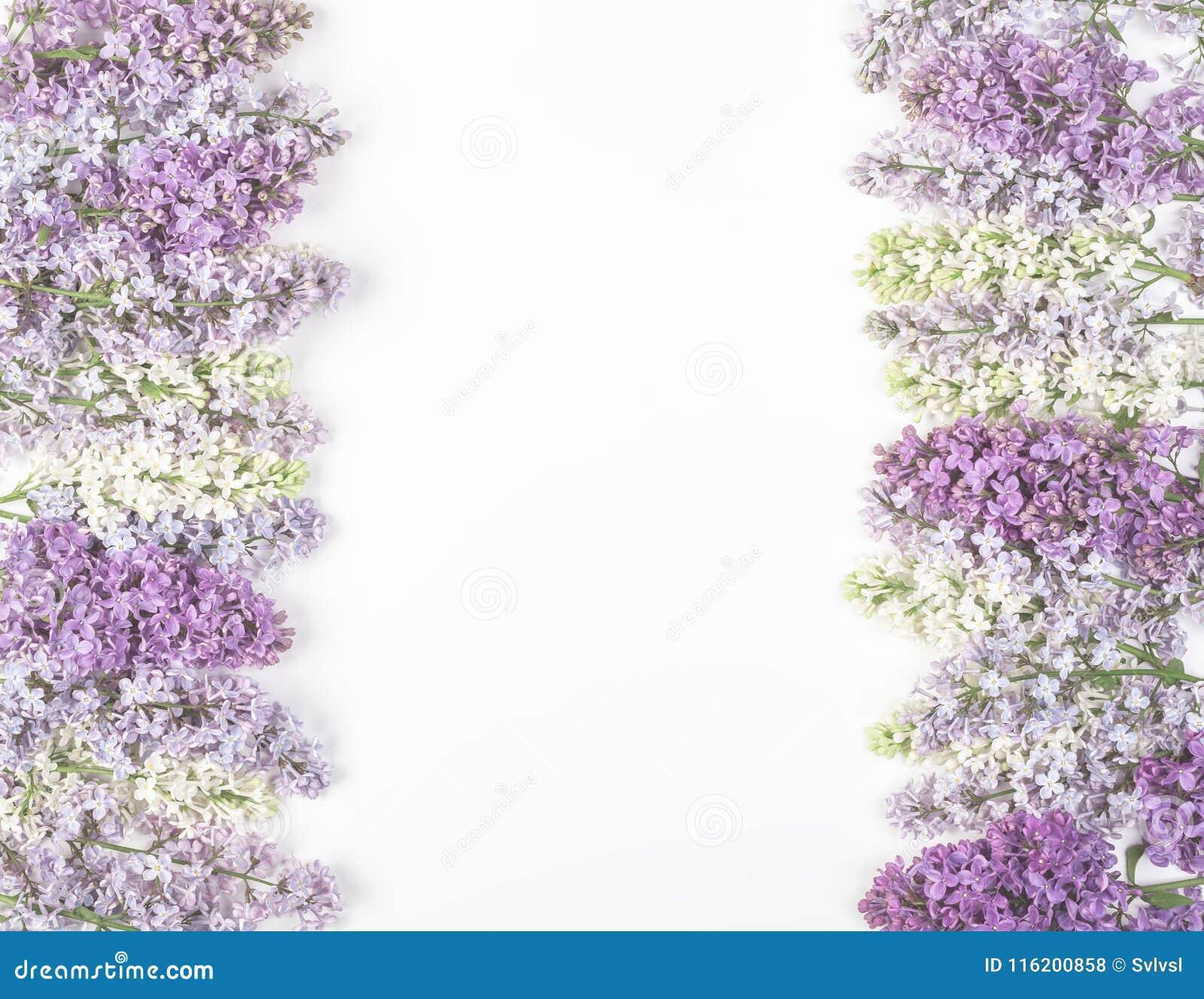 Marco floral hecho de las flores de la lila de la primavera aisladas en el fondo blanco Visión superior con el espacio de la copi