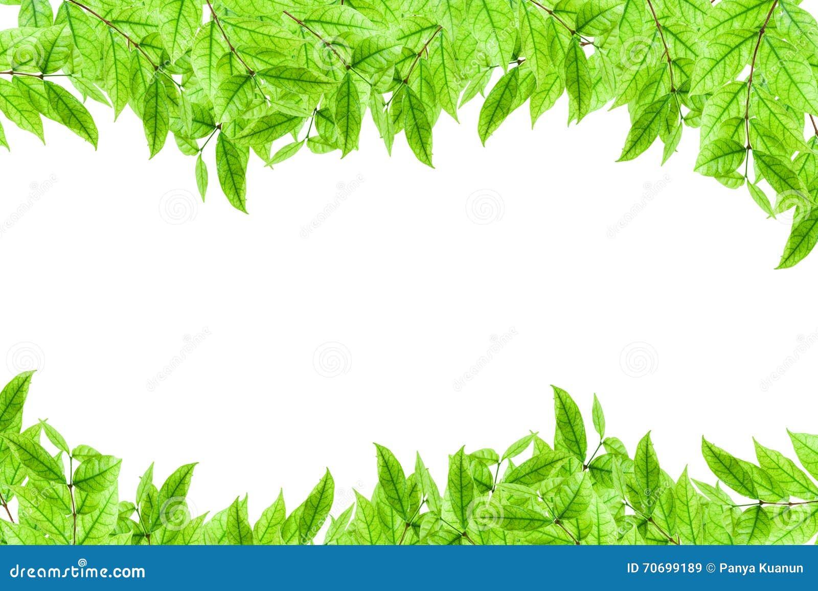 Marco Joven Fresco De La Planta Verde Y De La Hoja En El
