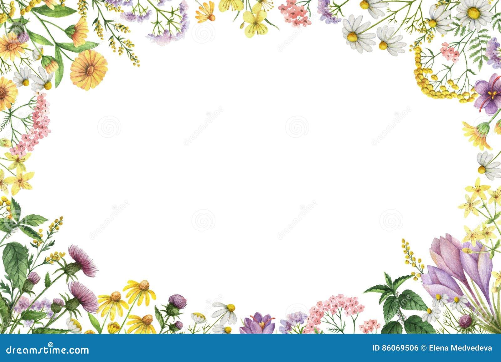 Marco rectangular de la acuarela con las plantas del prado