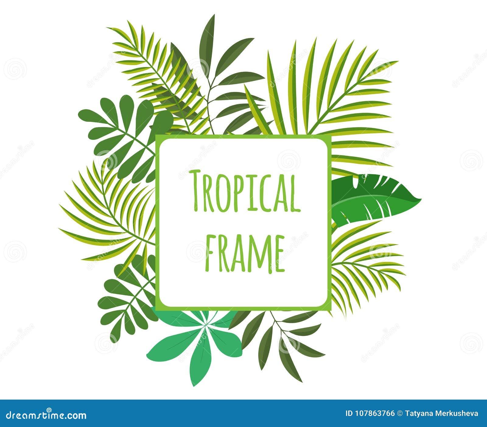 Marco Tropical Cuadrado, Plantilla Con El Lugar Para El Texto ...