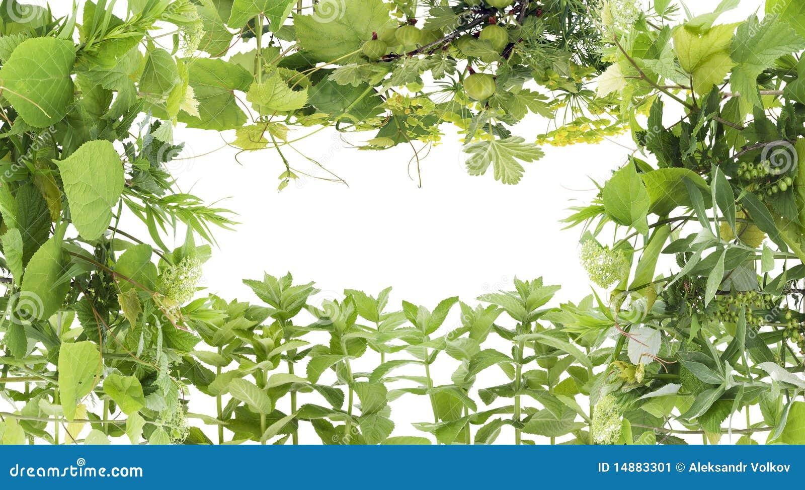 Marco verde de las plantas imagen de archivo imagen - Marcos para plantas ...