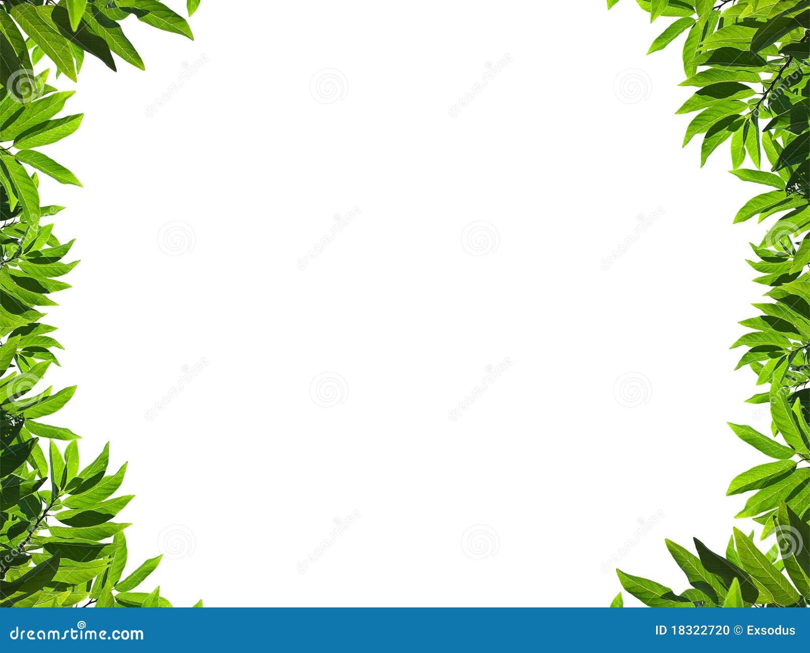 Marco verde natural de la hoja foto de archivo imagen - Marcos para plantas ...