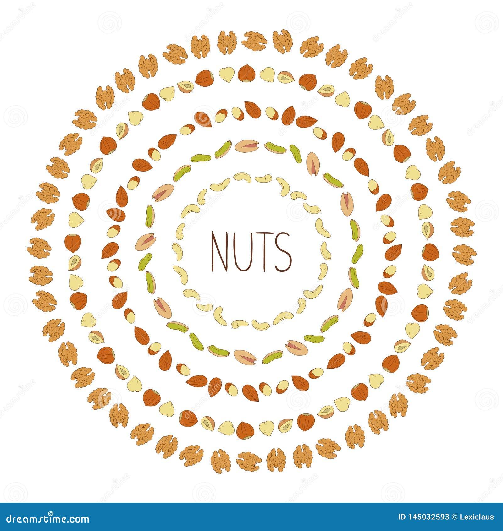 Marcos del vector con las nueces