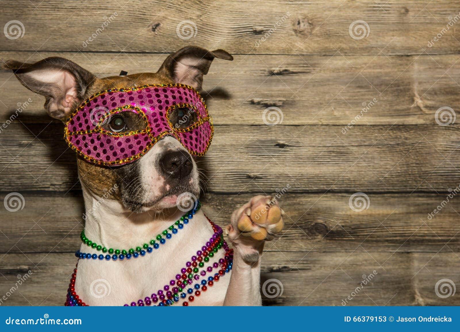 Mardi Gras Dog