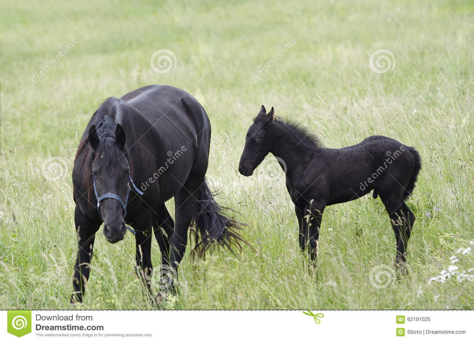 Mare With Black Colt On um prado