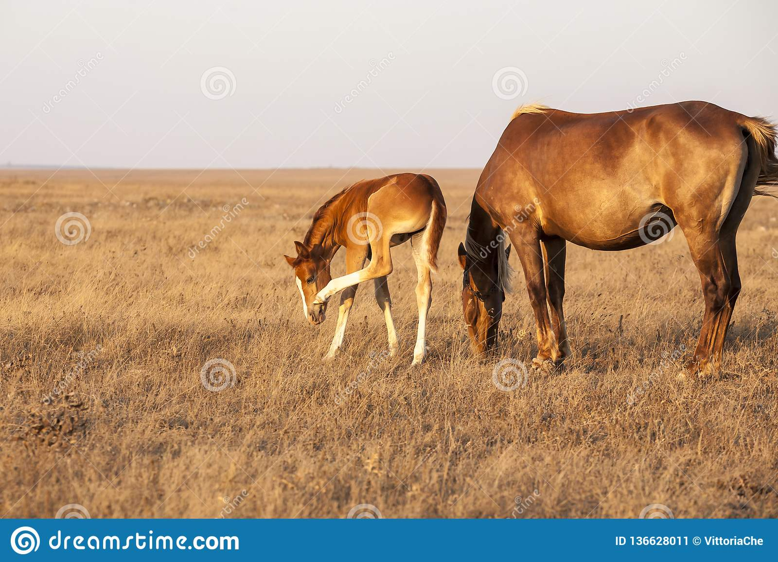 Mare with cute little foal on the pasture