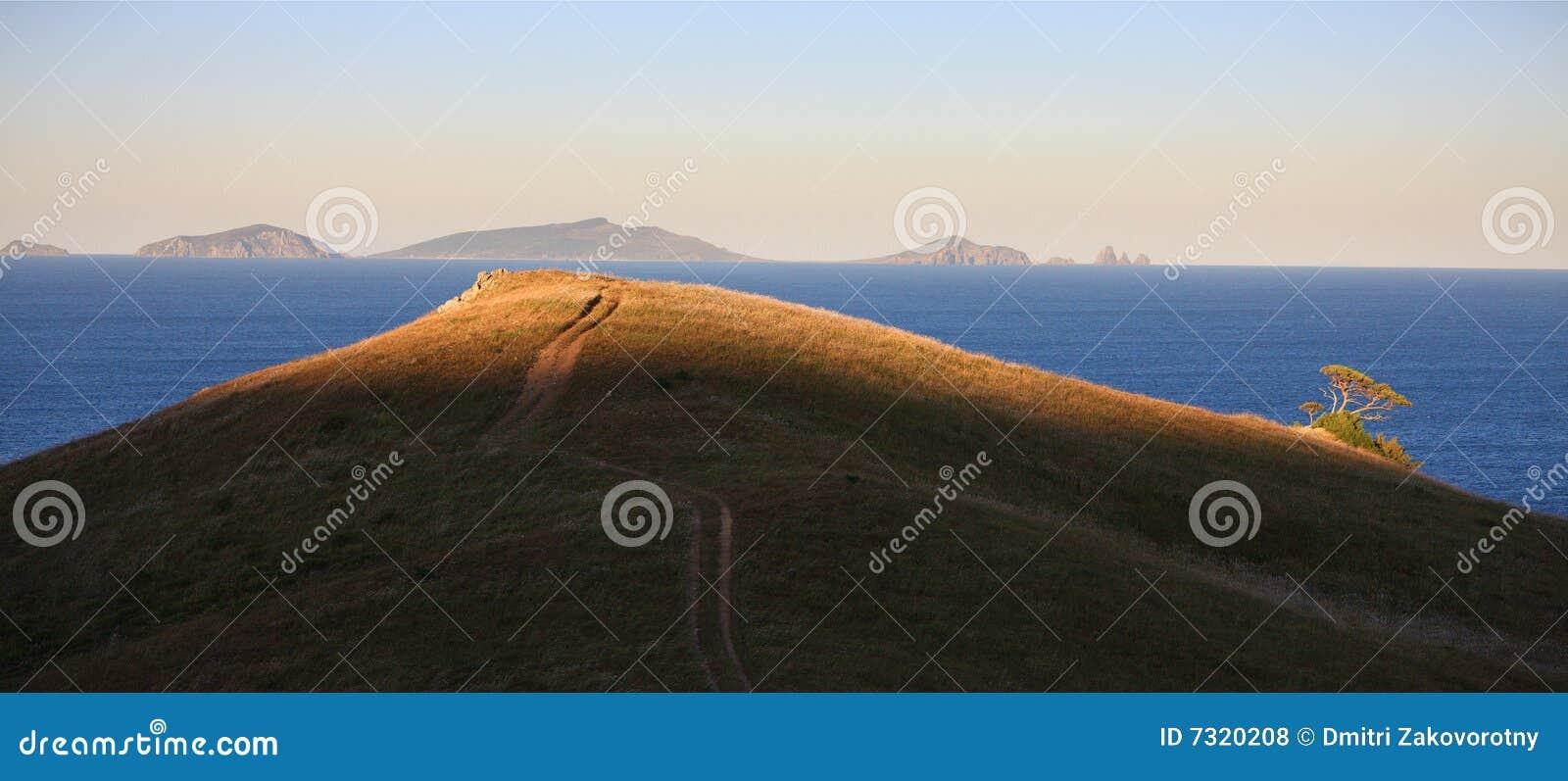 Mare di Giappone. Albero brillante.